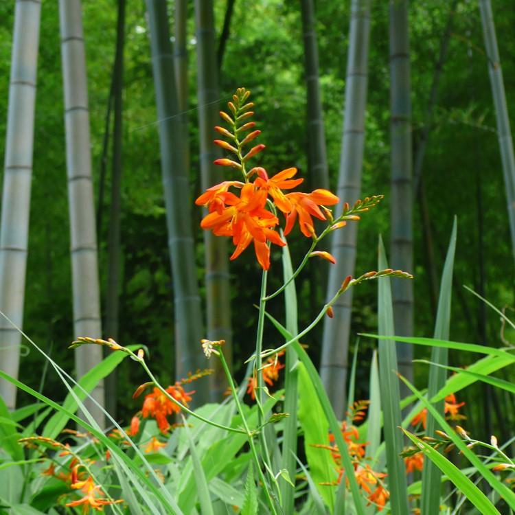 四季折々のお花が楽しめる北鎌倉